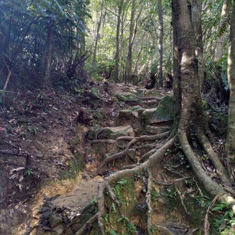 台湾新北市-新山登山中の風景