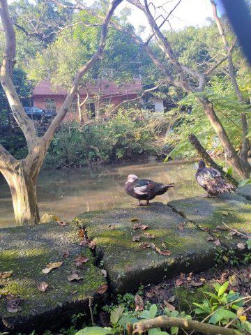 新山夢湖登山歩道に向かう途中の池にいる鳥